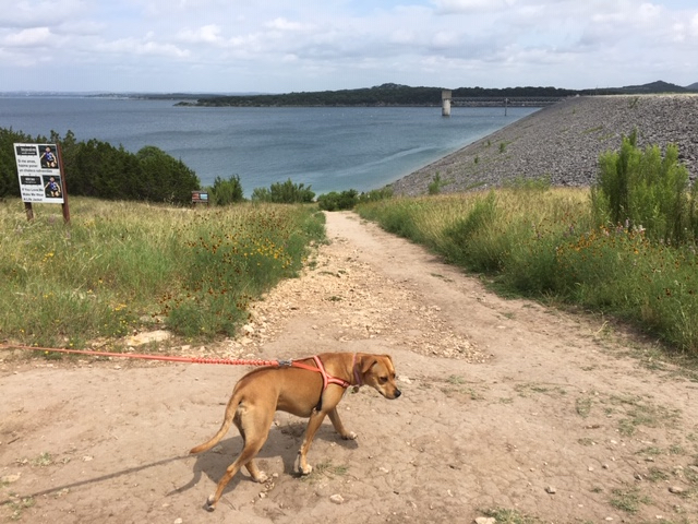 Trail leading down to the dog friendly beach at Scenic Overlook Park on Canyon Lake.