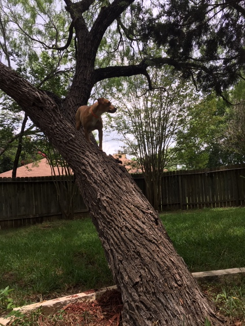 If Abbey continues to climb this tree she won't need to lose weight.