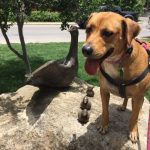 Why Visit the Dog Friendly Riverwalk in Boerne?