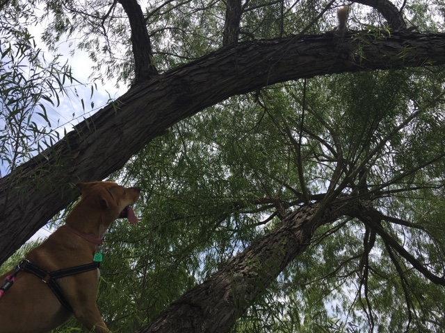 Chasing a squirrel up a tree is better exercise for a dog than no exercise.
