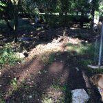 Lorence Creek Park Needs a Dog Friendly Update