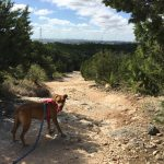 Eisenhower Park is One of the Best Places to Hike with Your Dog
