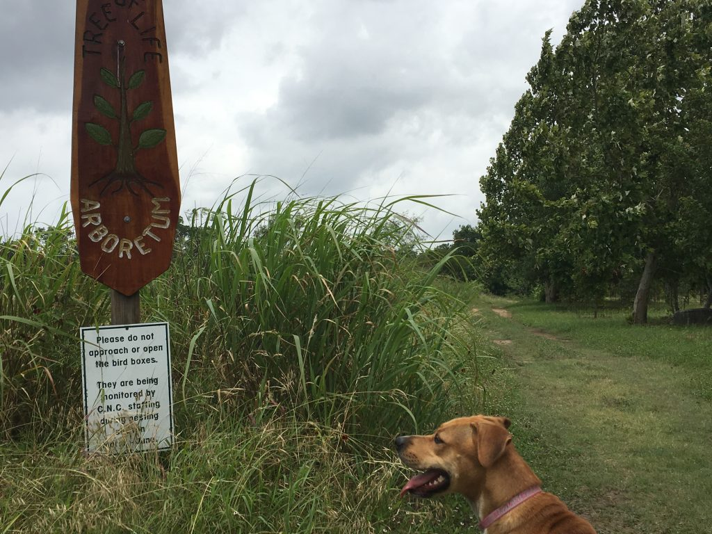 Tall grass can be found between the trails at Cibolo Nature Center