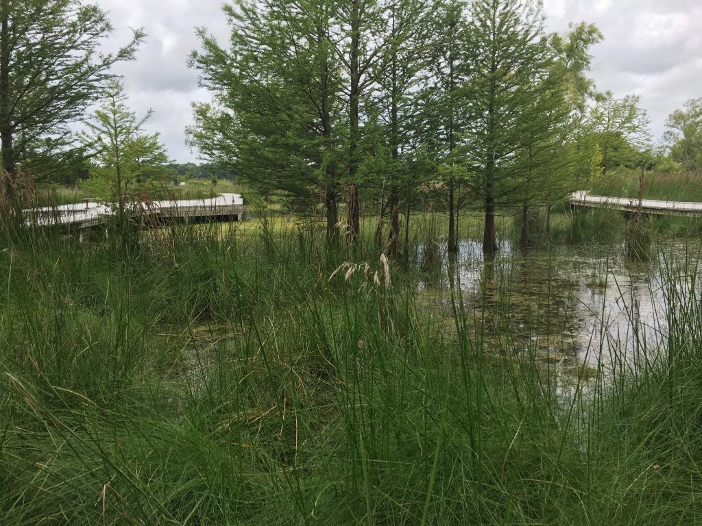 The marshland at Cibolo Creek Nature Center has a dock so you can walk through the marsh