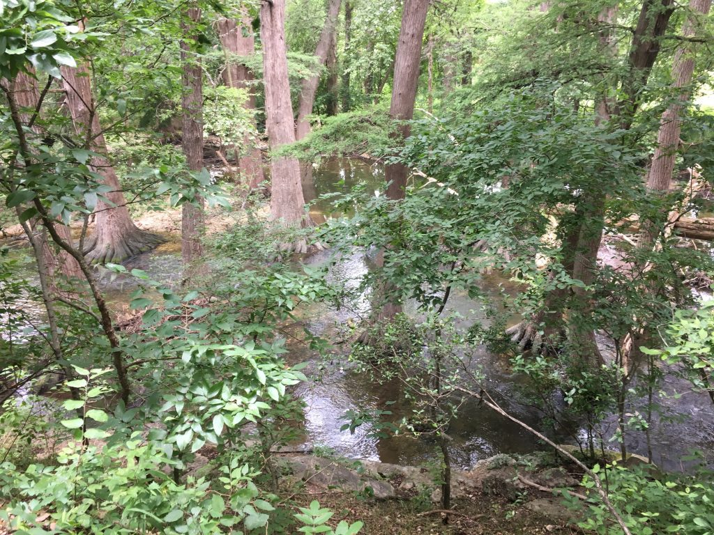 An upper level view of the creek at Cibolo Creek Nature Center