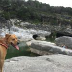 The Top 7 Questions About Dog Friendly Things near Me