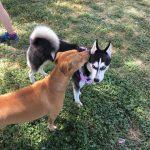 Best Dog Parks in San Antonio