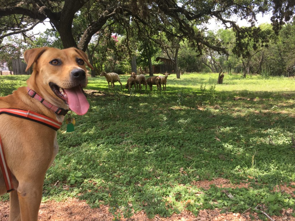 Abbey enjoying the Living History Farm at LBJ State Park