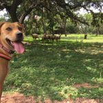 LBJ State Park & Ranch - 3 Reasons to Go