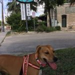 5 Points Local is Gluten Free, Dog Friendly & Delicious