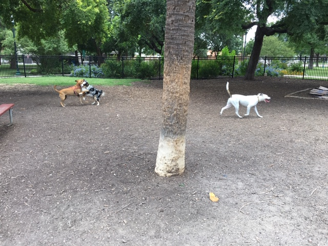 Push and shove at Madison Square Dog Park