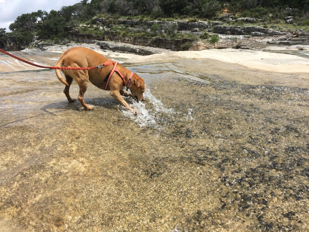 Abbey appears to rip water from the Pedernales River