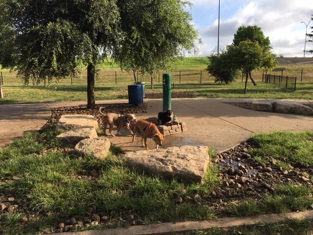 The water tub at Tom Slick Dog Park.