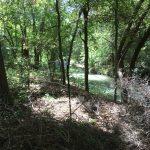 Medina River Natural Area - Dog Friendly Hiking at a Rare South Side Park