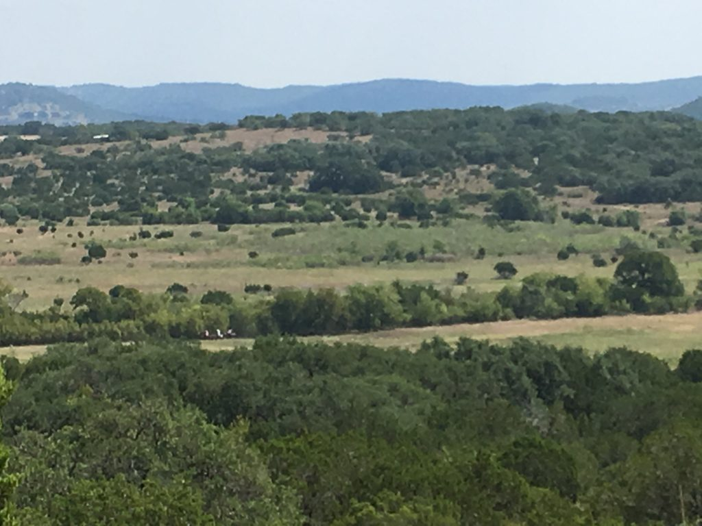 Three horseback riders on the trail in the distance at Hill Country State Park.