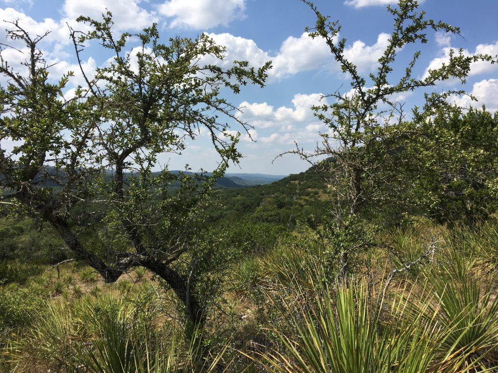 Scenic view through the trees at Hill Country State Natural Area.