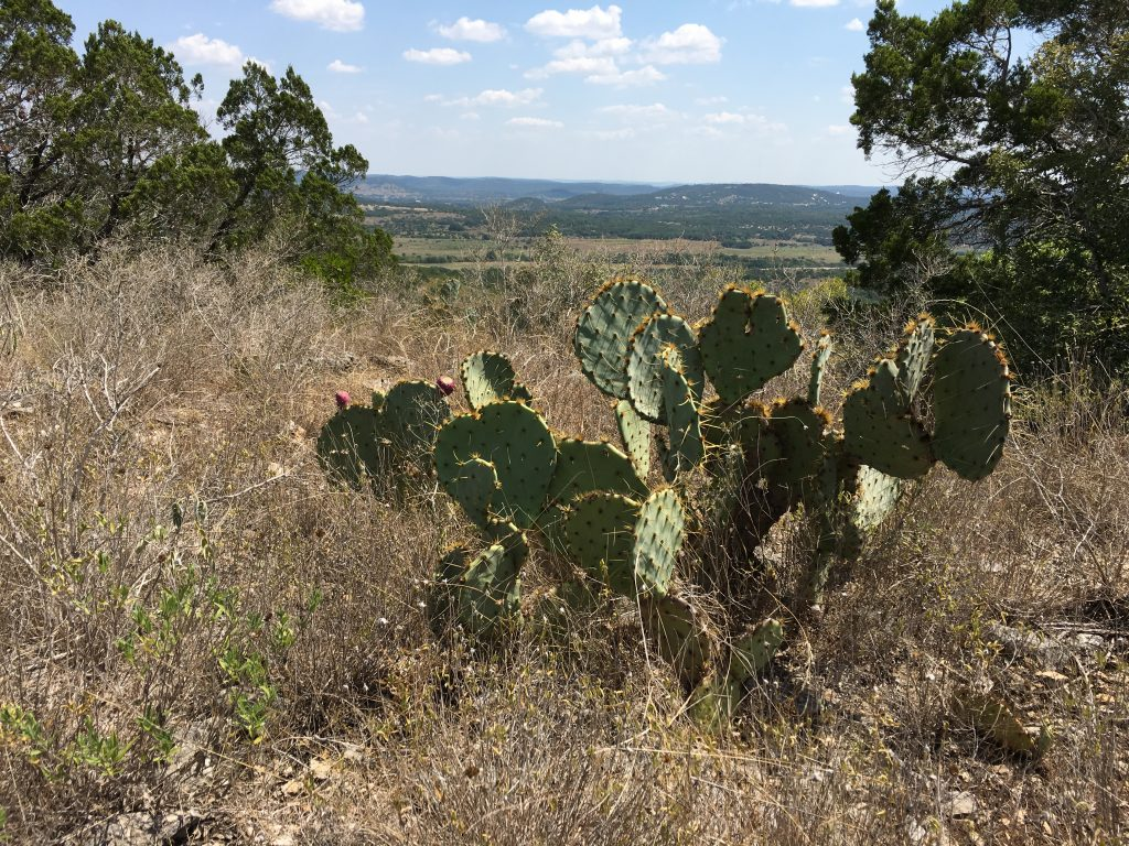 A cacti view at Hill Country State Natural Area from the overlook.