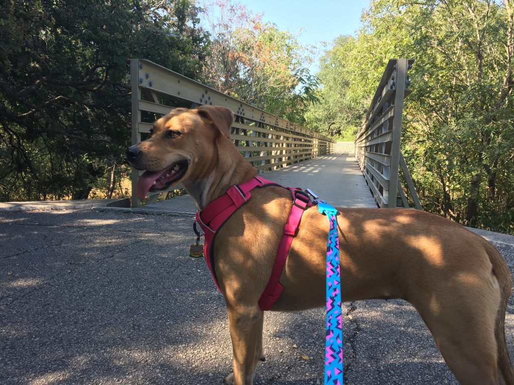 Abbey stands in front of the long bridge over the Salado Creek.