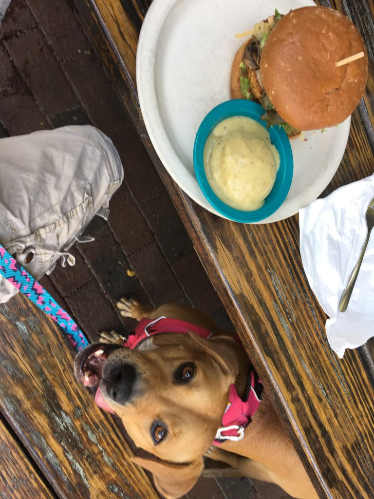 The Big Nasty Burger on an outdoor picnic table at the dog friendly restaurant.