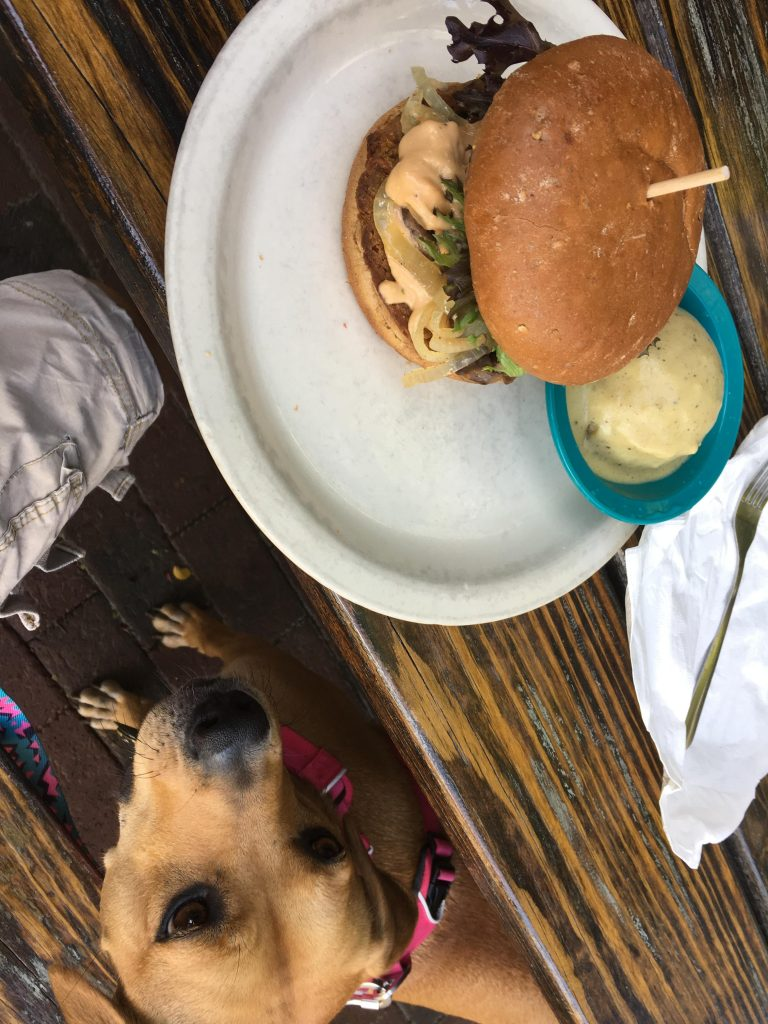 Abbey looks at the vegetarian burger at Green, a dog friendly restaurant.