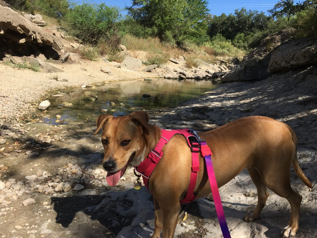 Abbey walks through the dry creek at Cathedral Rock Park in San Antonio.