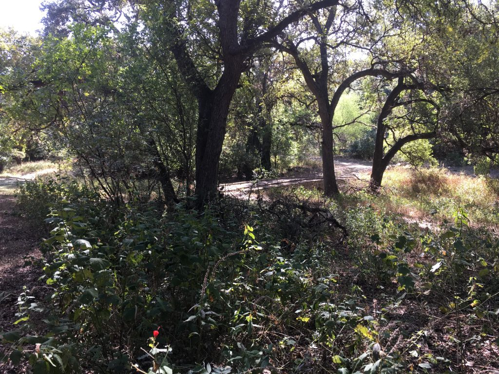 The only bridge near the nature trails at Walker Ranch Historic Park.
