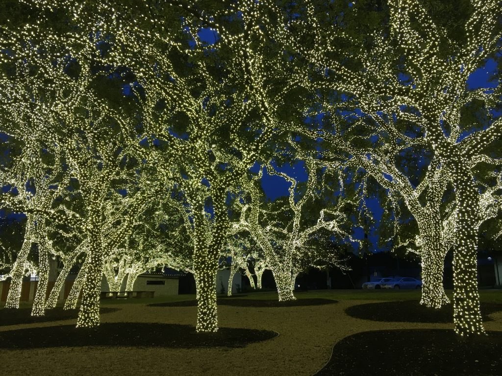 Thousands of lights around the trees in Johnson City.