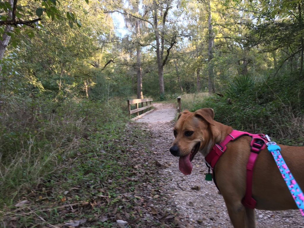 Abbey on the nature trail at Stephen F Austin State Park.