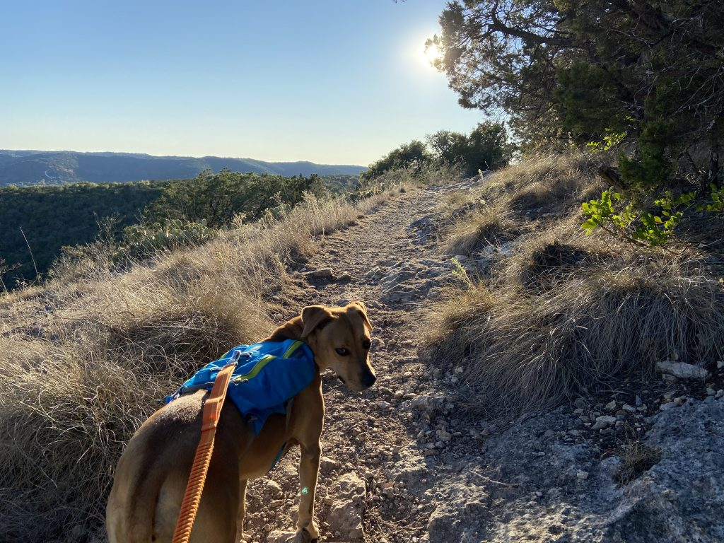 Simply one of our dog friendly adventures where Abbey conquered the Hill Country.
