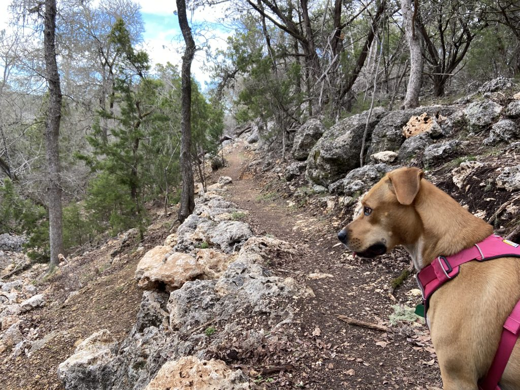 One of two new trails at Guadalupe River State Park, this is Curry Creek Overlook Trail and it's dog friendly.