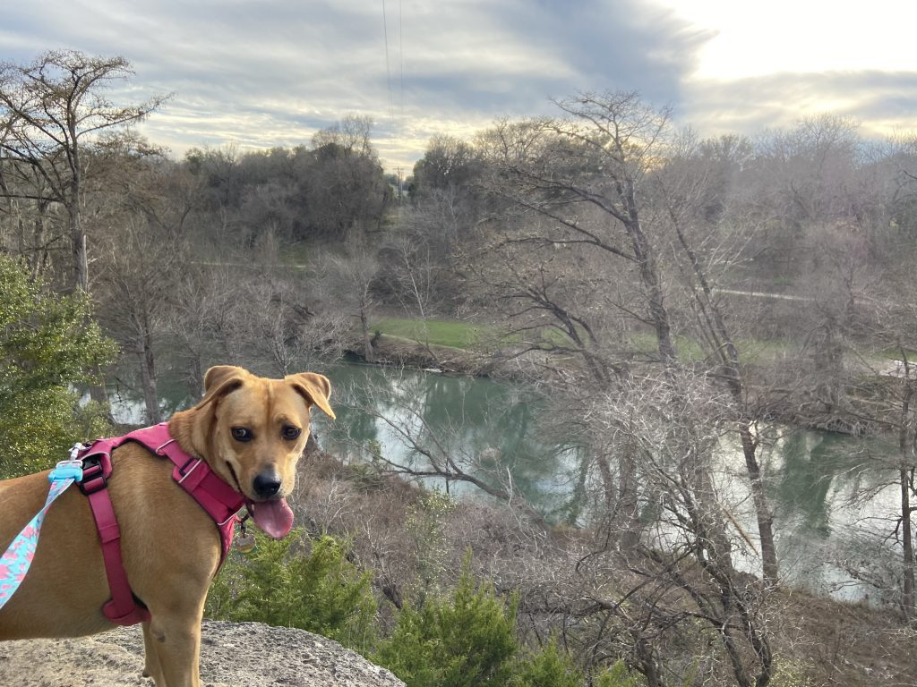 The Guadalupe River can be seen from the Golden-cheeked Warbler Trail.