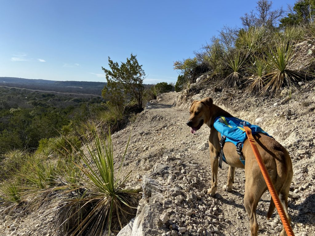 Abbey hikes the dog friendly trails with ease at South Llano River State Park.