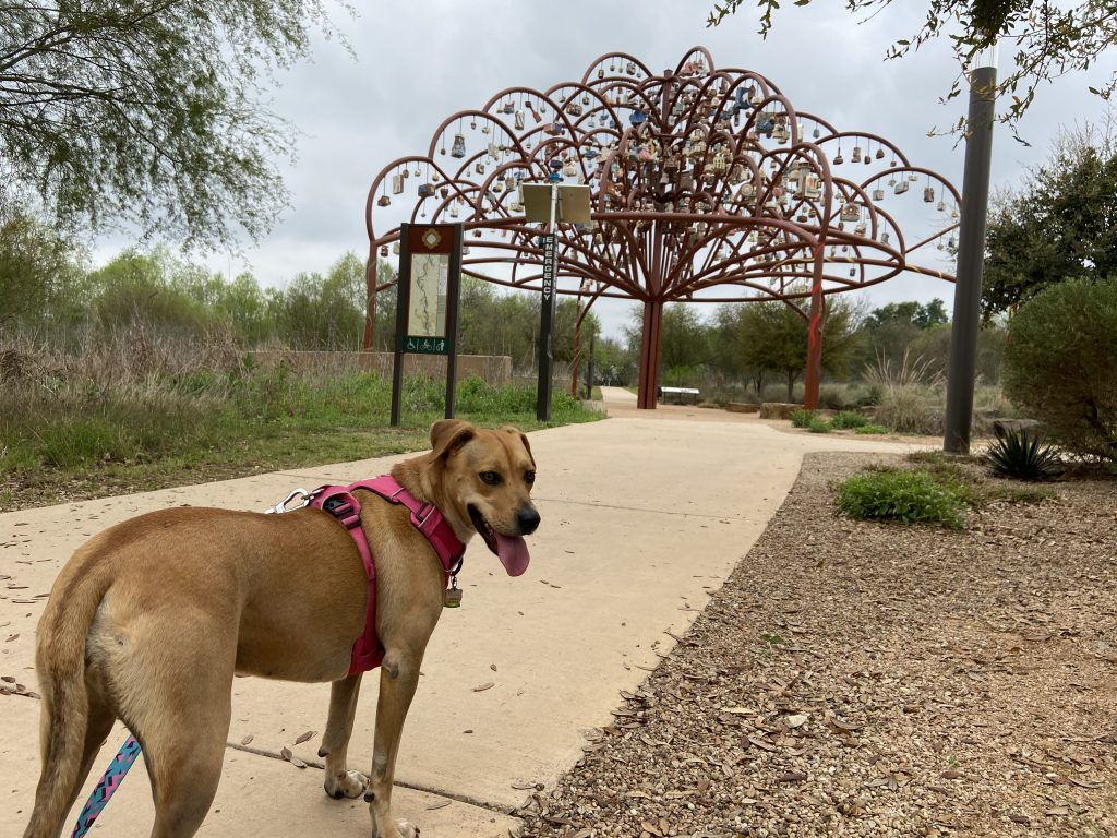 The dog friendly riverwalk where we found metal art near Mission Espada.