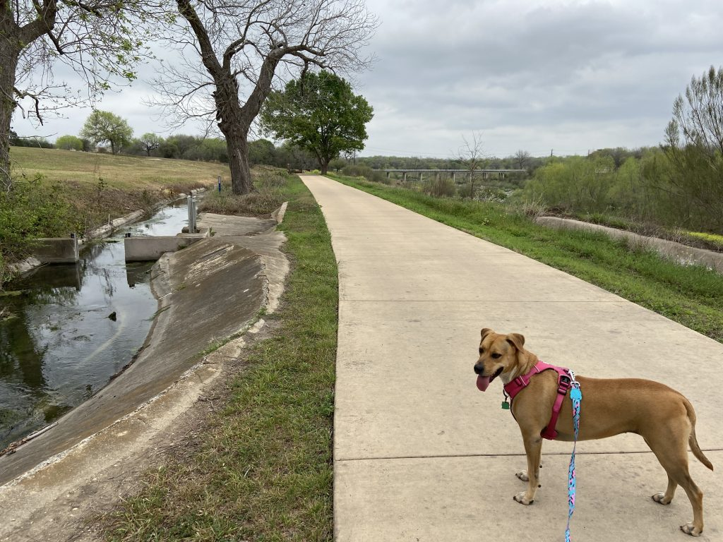The Espada acequia runs for miles, and can be seen from part of the dog friendly San Antonio Riverwalk.