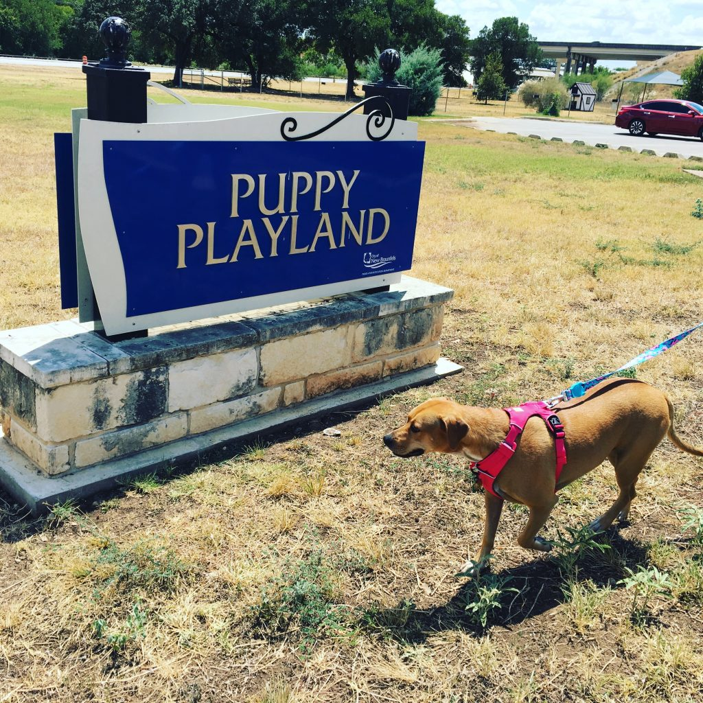 Abbey walks by the sign in front of Puppy Playland.