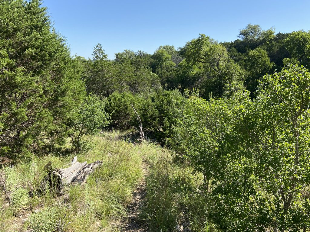 This is a very natural trail at Kreutzberg Canyon in Boerne, Texas.