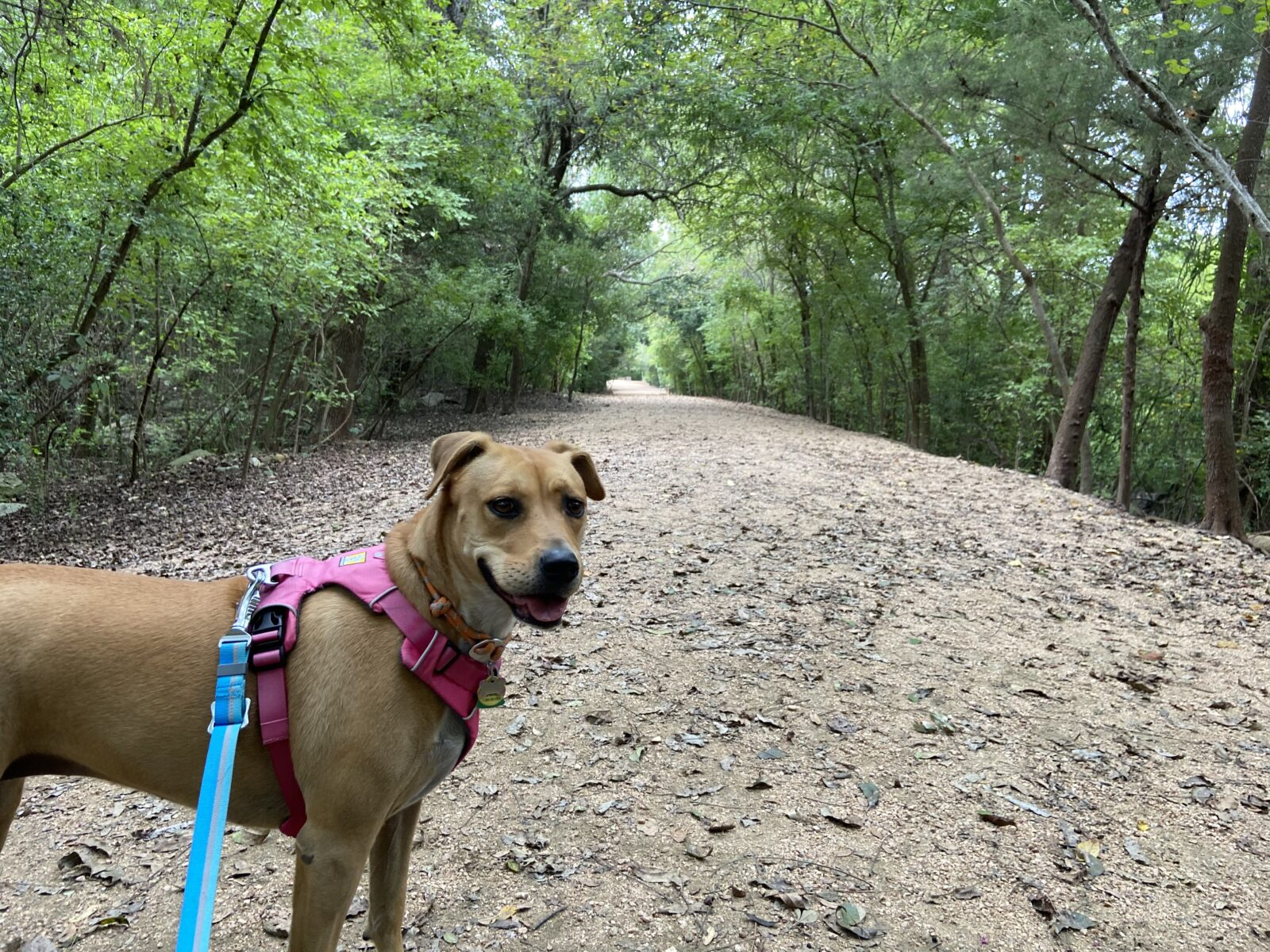 The well-shaded loop trail at dog friendly, Red Bud Isle