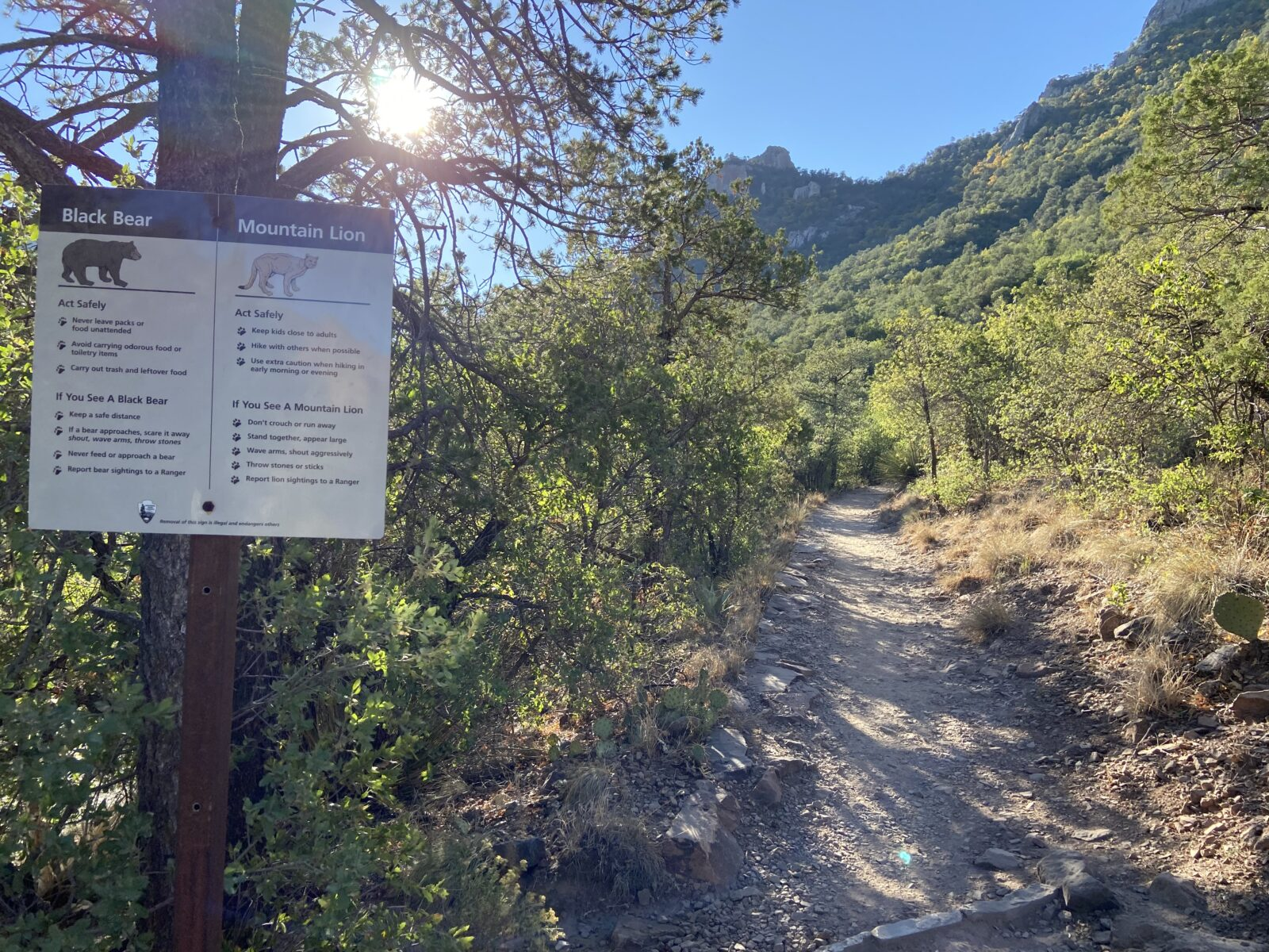 The Lost Mine Trail warns of black bears and mountain lions at Big Bend National Park.